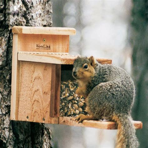 shop woodlink unfinished cedar lidded box squirrel feeder