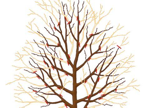 Faire Pousser Un Cerisier à Partir D Un Noyau by Les 25 Meilleures Id 233 Es De La Cat 233 Gorie Les Arbres
