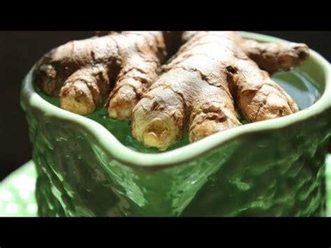 Cultiver Du Gingembre En Pot by Rempoter Le Gingembre Plantes