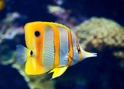 colorful saltwater fish the aquarium water change the corner of aquarium