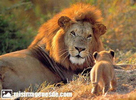 Imagenes De Animales Furiosos | related keywords suggestions for imagenes de animales