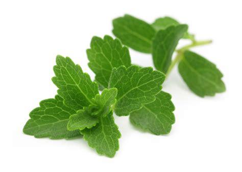Plante De Stevia by Info Stevia Tout Savoir Sur La St 233 Via