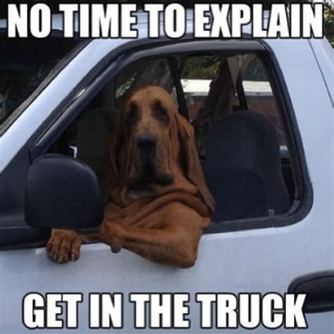 Dog In Car Meme - 479 best car memes images on pinterest car humor car