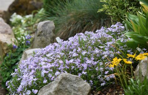 Rock Garden At The National Aviary Is A Tapestry Of American Rock Garden Society