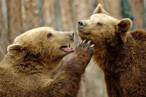 Bildergebnis für special animal relationships