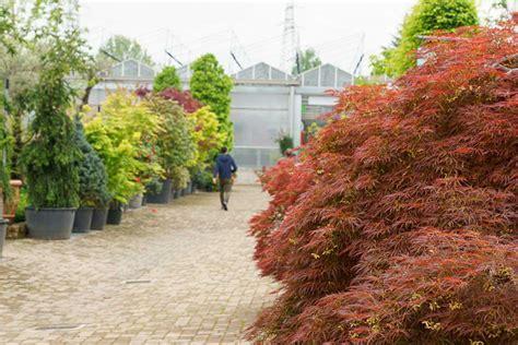 piante x giardino piante da giardino e esterno garden roagna vivai cuneo