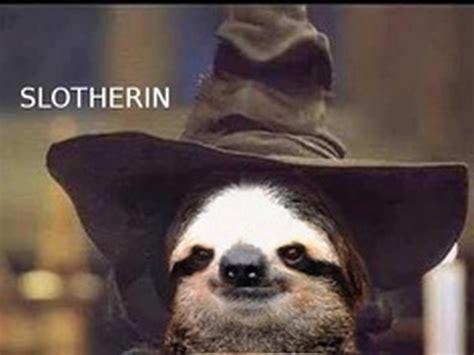 Cute Sloth Meme - the best of sloth memes 16 pics