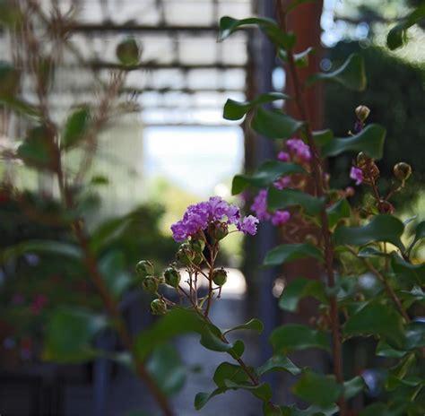 piante x giardino alberi e arbusti da giardino sempreverdi con fiori