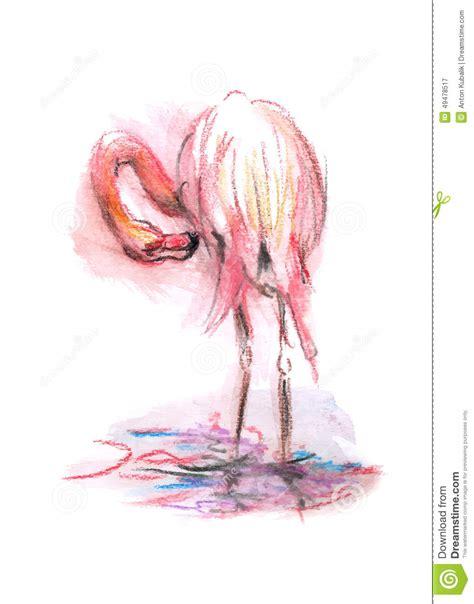 color sketch color sketch flamingo stock vector illustration of