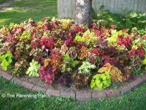 Tips and ideas for planting flowers around trees parenting patch