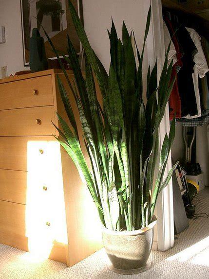 houseplants  de stress  home  purify