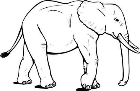 coloring page of african elephant elephant coloring pages dr odd