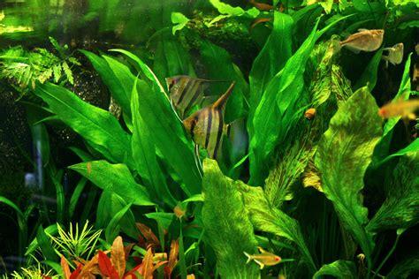 Home Aquarium by Aquarium Blog Aquarium Inrichten