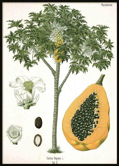 Poster Karakter Httyd Snotlout 30x40cm vintage plakat papaya