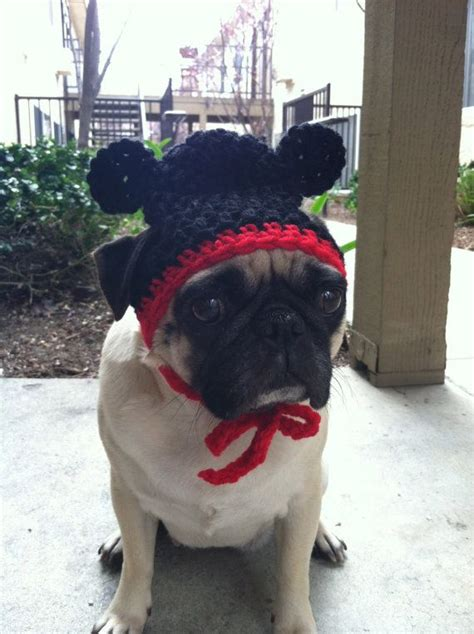 caps for pugs 65 best images about pugs wearing hats on a pug for dogs and turkey hat
