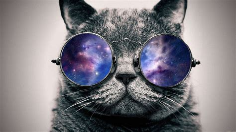 wallpaper hd chat lunette cat wallpaper tumblr pixelstalk net
