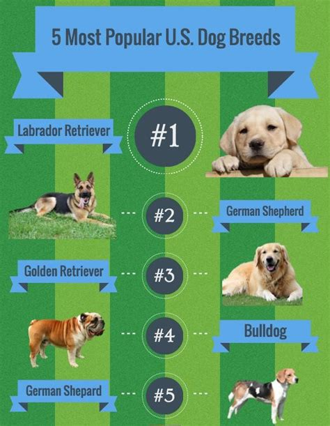 popular breeds in usa 5 most popular breeds in u s binsbox