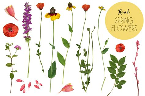 printable real flowers real flower clipart bbcpersian7 collections