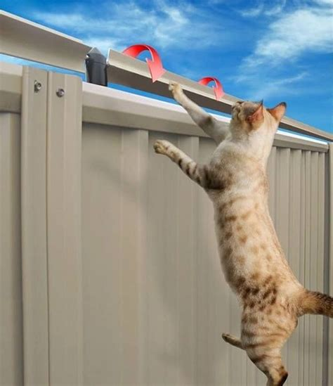 how to keep cats out of your backyard best 25 cat fence ideas on pinterest dog jumping fence cat enclosure and cattery
