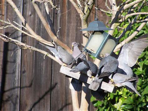 pigeon proof your bird feeder backyard chirper