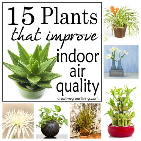 Best Houseplants For Air Quality | image gallery indoor plants air quality
