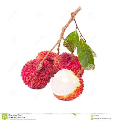 lychee fruit drawing litchi fruit stock image image 25228491