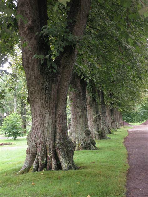 european trees tree talk along the gardens path