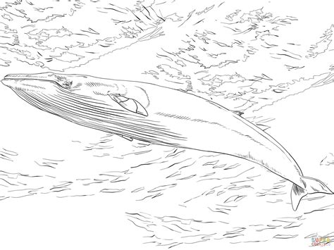 bowhead whale coloring page bowhead whale page coloring pages