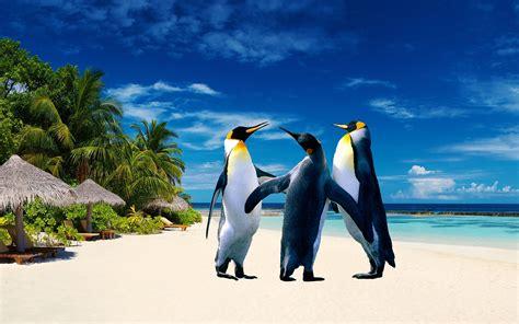 imagenes muestra windows 10 encontre unos pinguinos taringueros taringa