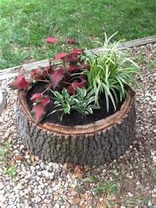 planter 3 tree stump
