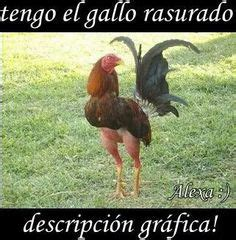 chistecde comadre 1000 images about frases para reir on pinterest humor