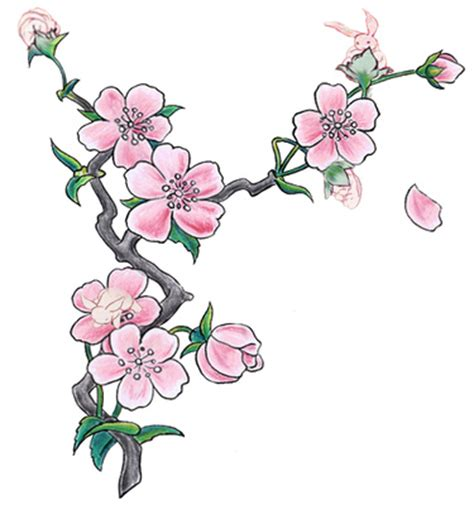 new year flower drawing cherry blossom tree cliparts co