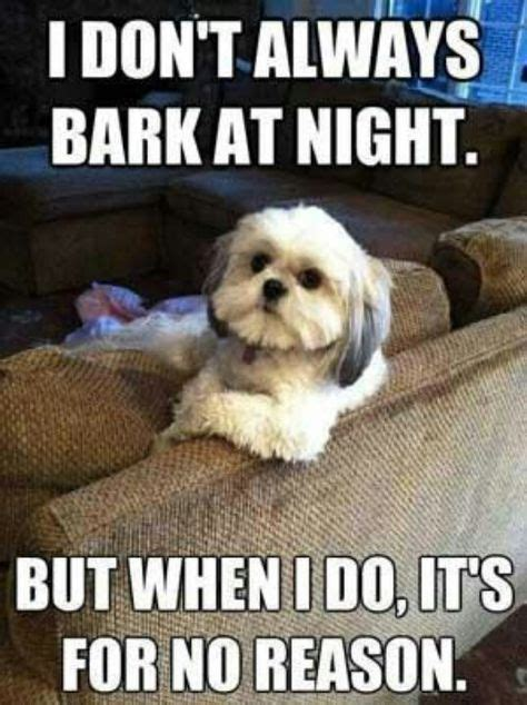 shih tzu meme 16 shih tzu memes of all time shih tzu daily