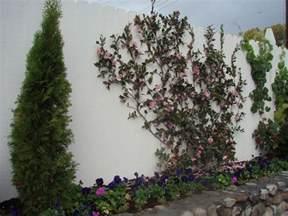 6 december 2010 gardening tips for the santa cruz mountains