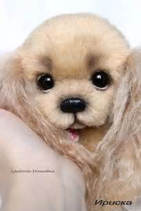 Cute Real Dogs with Big Eyes