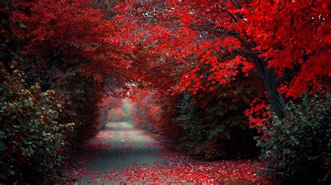 red nature wallpaper  pictures
