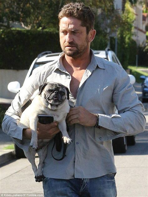 gerard butler pug gerard butler takes squish faced pug for a walk in west wine pug and