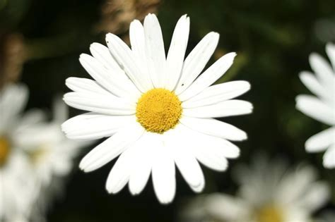 Beautiful White Flower ? WeNeedFun