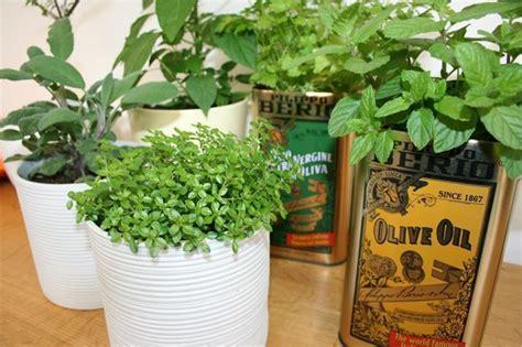 herb kitchen garden 17 best images about kitchen garden on pinterest gardens