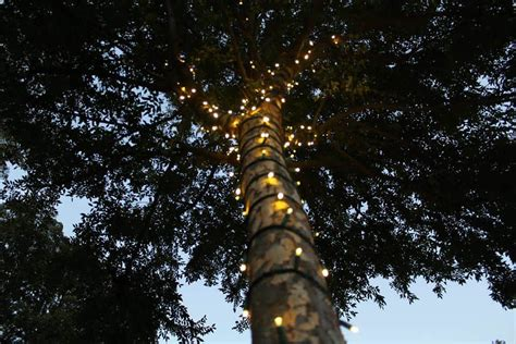 how to wrap trees with christmas lights how to wrap outside trees with lights