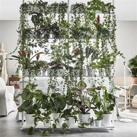 Vine House Plants an insider s guide to getting first dibs on the best ikea