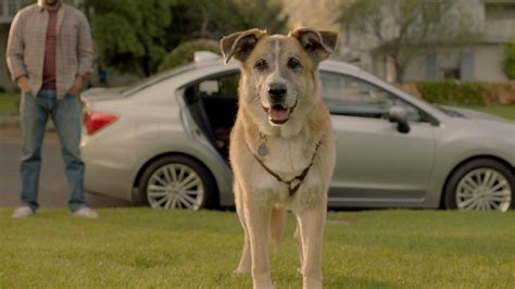 industrial puppy this subaru impreza commercial featuring willie nelson and a will make you cry