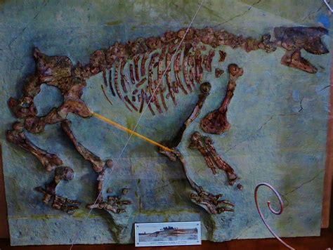 chalicotherium wikipedia