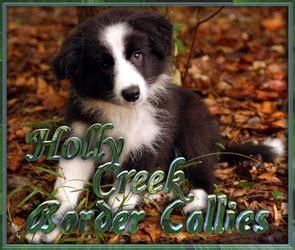 border collie puppies virginia creek border collies border collie puppies for sale in virginia