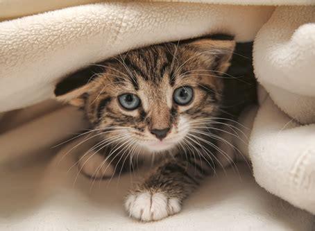 imagenes en movimiento de ratones im 193 genes de gatos 174 fotos de gatitos lindos 101 fotos