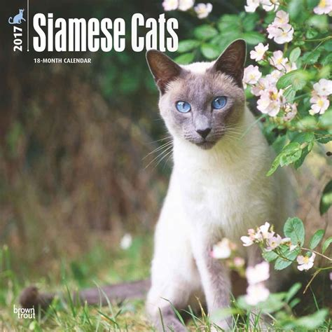 Cat Calendar 2018 Siamese Cats Calendars 2018 On Abposters