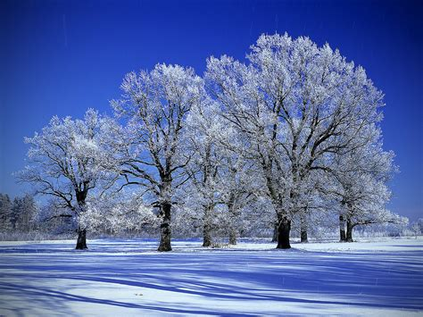 snow tree paint pencil cg other art forms pinterest