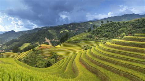 wallpaper rice terrace china  travel