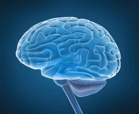 brain images new study suggests brain glitch may cause ocd fox news