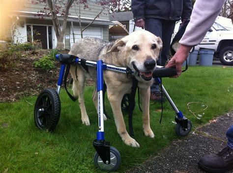 handicap dogs wheels for dogs with hip problems upcomingcarshq